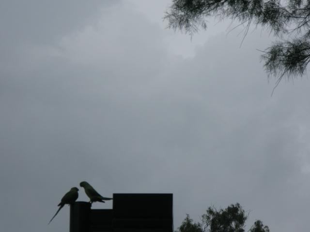 סוער בפארק 28-2-09 082