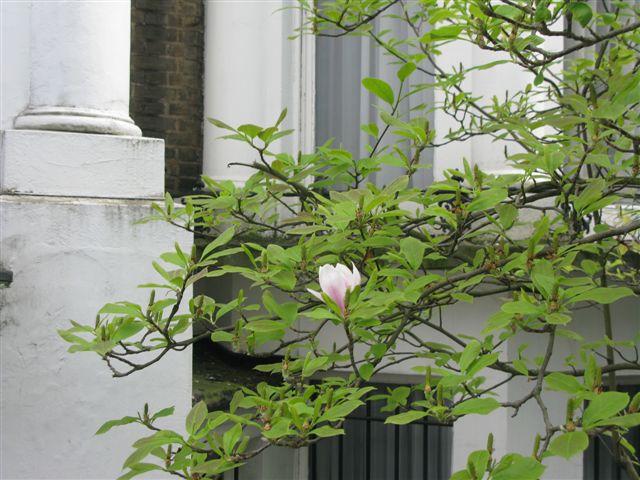אביב בין לונדון לתל אביב