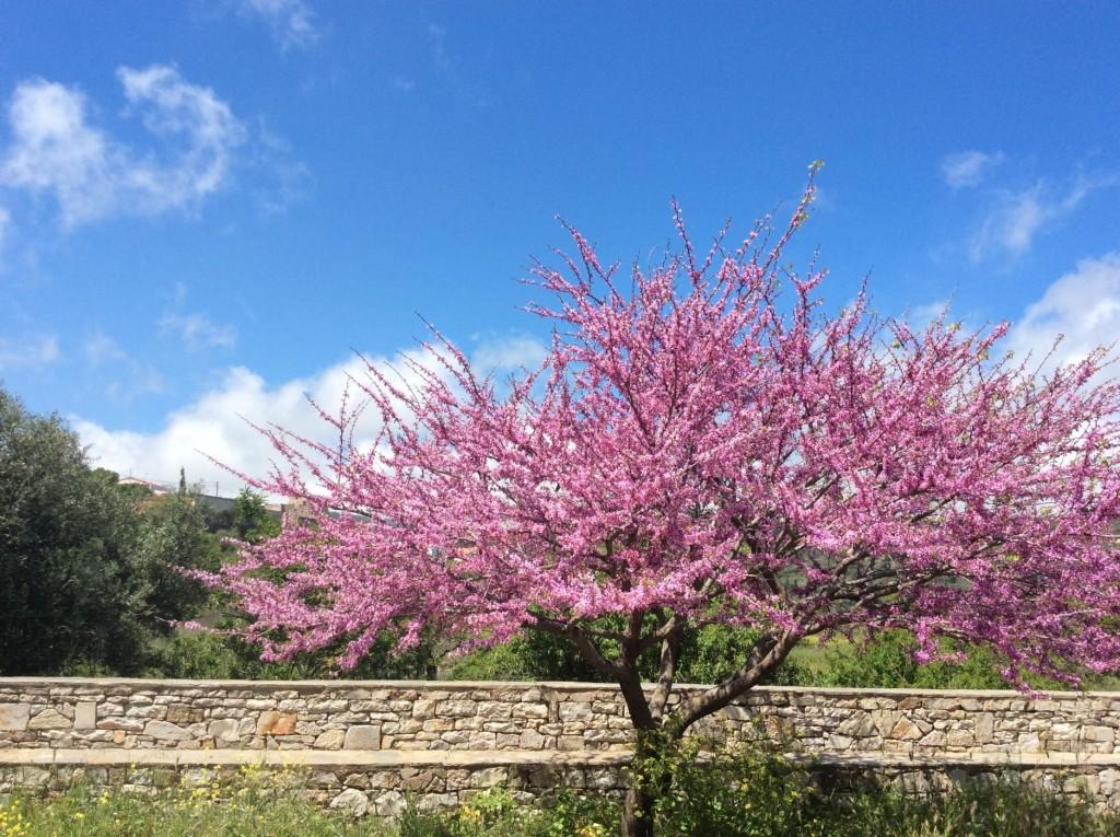 פרידה מאביב יווני שפרחיו הם מקור השראה לאוכל טעים