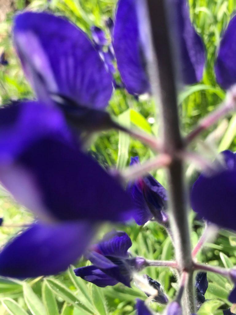 מצמח למופשט – צילום בטבע ובהשראה אביבית
