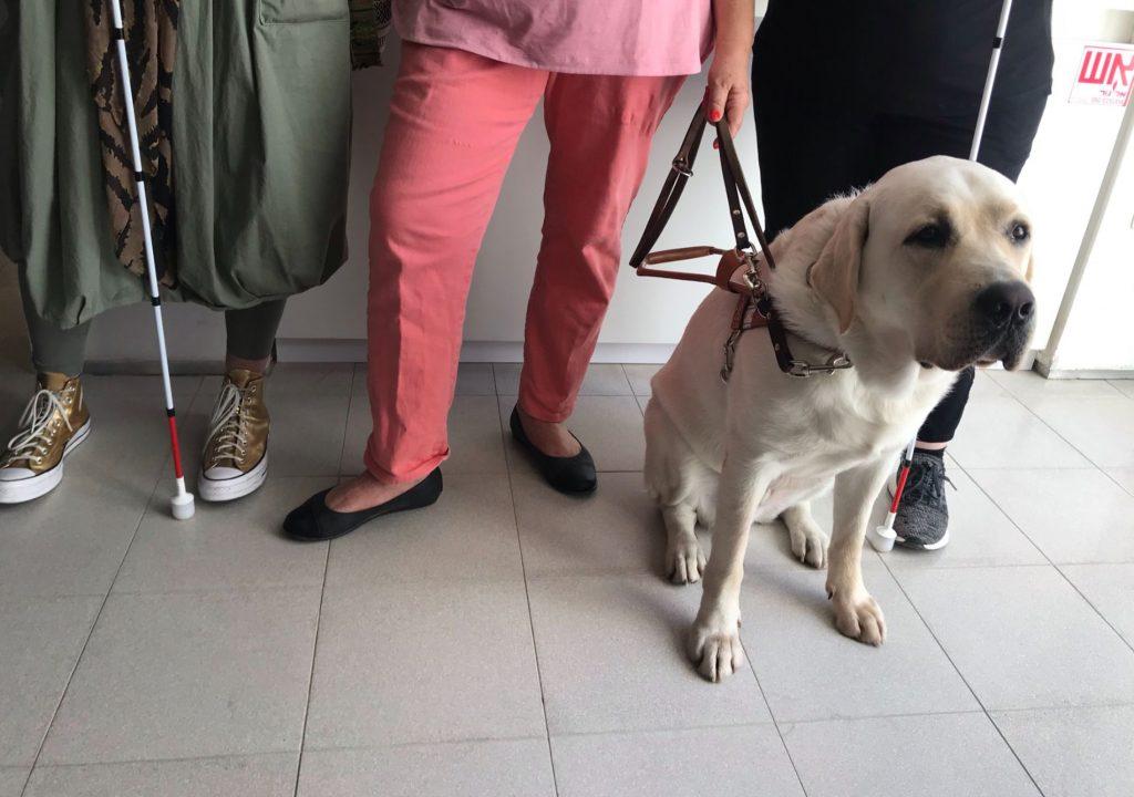 גם כלב נחייה אחד מקשיב לסברים